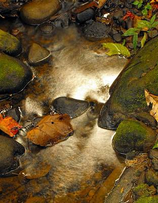 Photograph - Guapiles Rio Blanco Creek Reflections by William OBrien