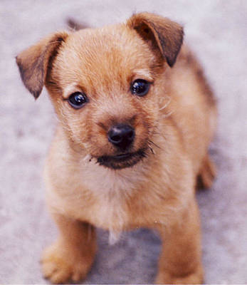 Holmberg Photograph - Guard Dog-herculaneum by Norm Holmberg