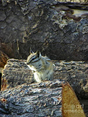 Photograph - Guarding The Log Castle by KD Johnson