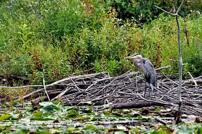 Guarding The Nest Art Print by Larry Hutson Jr
