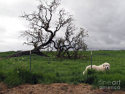 Print featuring the photograph Guarding The Sheep by Leslie Hunziker