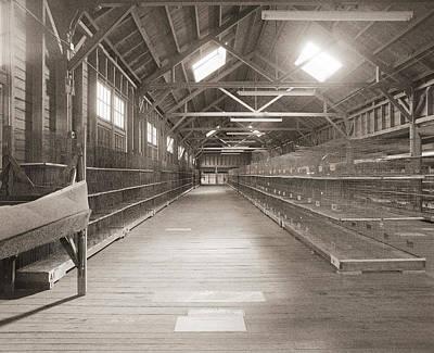 Guinea Pig Cages Original