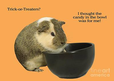 Photograph - Guinea Pig Trick-or-treat by Renee Trenholm