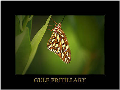 Photograph - Gulf Fritillary 2 by David Weeks