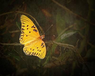 Photograph - Gulf Fritillary Butterfly by Rudy Umans