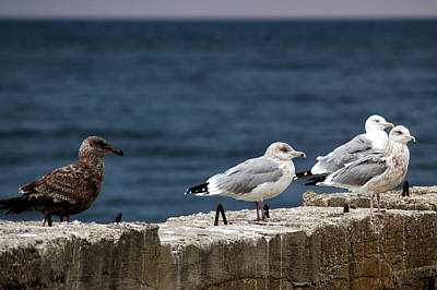 Nature Photograph - Gull Differences 3 Vs 1 by LeeAnn McLaneGoetz McLaneGoetzStudioLLCcom