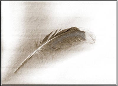 Photograph - Gull Feather by Marie Jamieson
