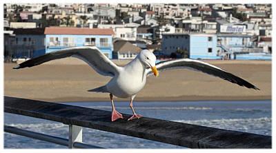 Redondo Beach Pier Wall Art - Photograph - Gull On The Pier by Danna Lynn Cruzan