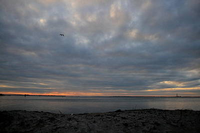 Photograph - Gull Over The Inlet by Christopher Kirby