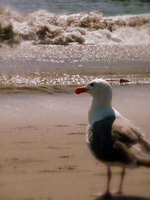 Photograph - Gull Watching The Waves by Cindy Wright