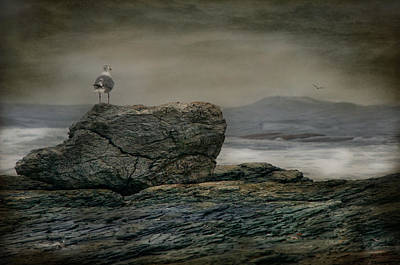 Photograph - Gullible by Robin-Lee Vieira