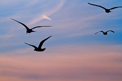Photograph - Gulls At Dusk by Karol Livote