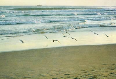 Gulls Flying Print by Jill Ferry