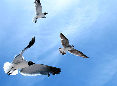 Photograph - Gulls In Flight by Judy Wanamaker