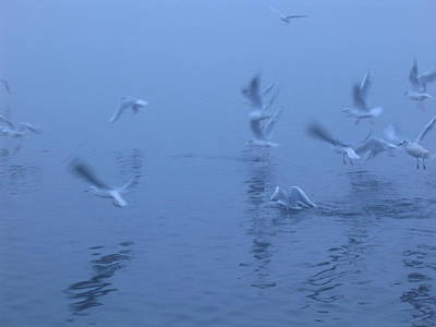 Photograph - Gulls In The Mist by Rob Hemphill