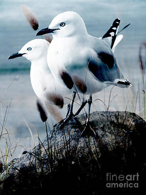 Photograph - Gulls by Karen Lewis