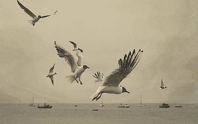 Gulls Print by Linsey Williams