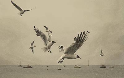 Gulls Art Print by Linsey Williams