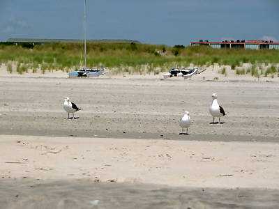 Photograph - Gulls Patroling The Shore by Margie Avellino