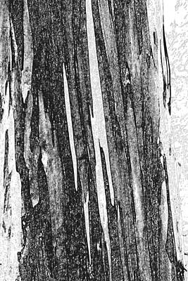 Photograph - Gum Bark by Elizabeth  Doran