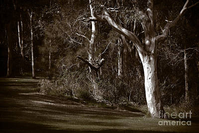 Photograph - Gum Trees At Myuna Bay by Fran Woods