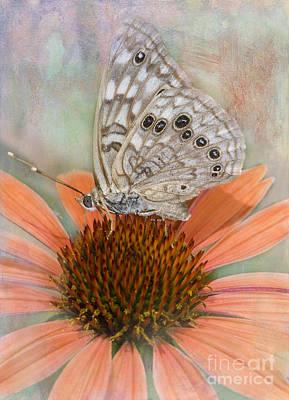 Hackberry Emplorer Butterfly Art Print by Betty LaRue