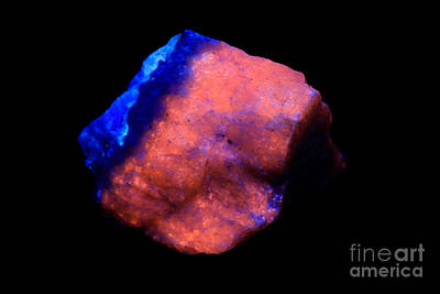 Sodalite Photograph - Hackmanite In Uv Light by Ted Kinsman