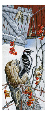 Hairy Woodpecker And Bittersweet Original by David Besenger