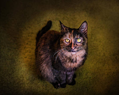 Photograph - Haley Joel by Pat Abbott