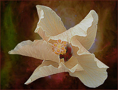 Hibiscus Floats In Space Art Print by Barbara Middleton