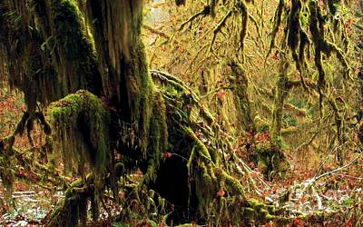 Photograph - Hall Of Mosses by Adam Jewell