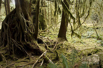 Photograph - Hall Of Mosses by Heather Applegate