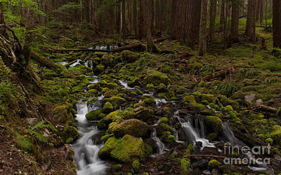 Olympic National Park Photograph - Hall Of The Mosses by Mike Reid