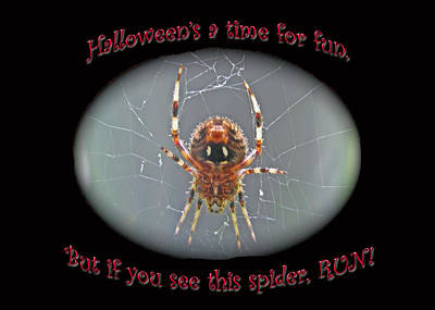 Halloween Card - Marbled Orb Weaver Spider Art Print by Mother Nature
