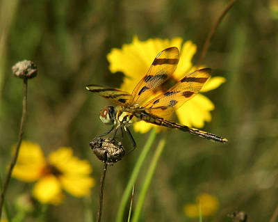 Photograph - Halloween Pennant by Peg Urban