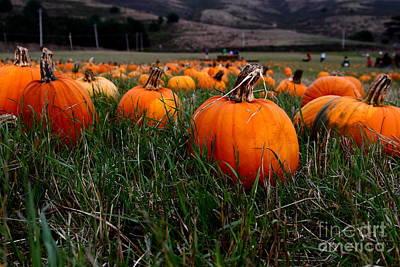 Halloween Pumpkin Patch 7d8405 Art Print by Wingsdomain Art and Photography