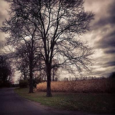 Woodland Wall Art - Photograph - #halloween #spooky #trees #woodland by Shannon Ferguson