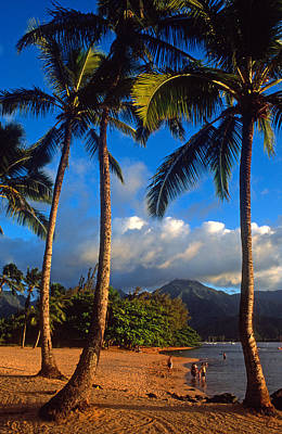 Hanalei Bay Palms Art Print