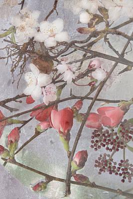 Hanami Art Print by Antonia and Fabio Duealberi