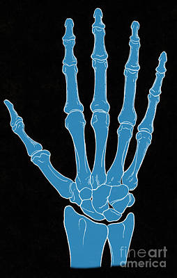 Hand And Wrist Bones Art Print by Science Source