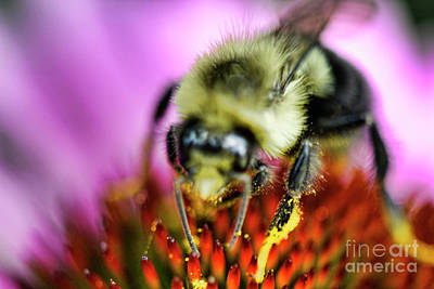 Photograph - Hands In The Pollen Pot by Traci Cottingham