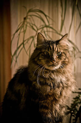 Photograph - Handsome Harv by Trish Tritz