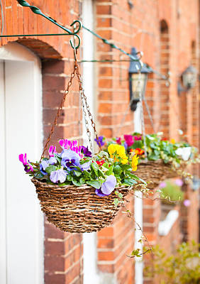 Hanging Basket Photograph - Hanging Baskets by Tom Gowanlock
