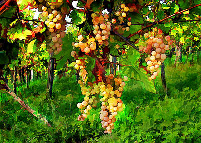 Sparkling Wines Digital Art - Hanging Grapes On The Vine by Elaine Plesser