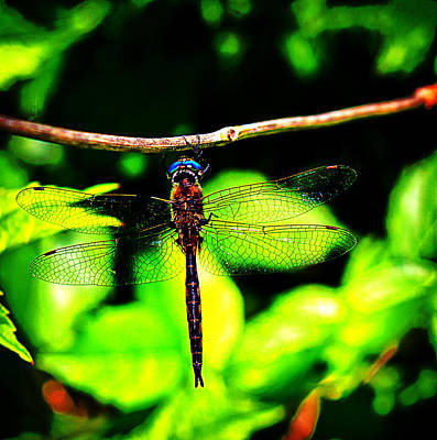 Dragonfly Photograph - Hanging On by Barry Jones
