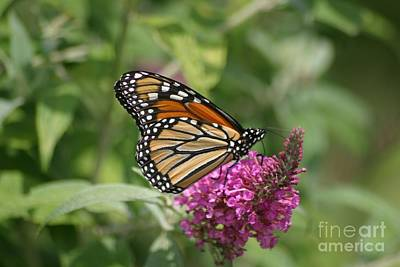 Photograph - Hanging On To Summer by Living Color Photography Lorraine Lynch