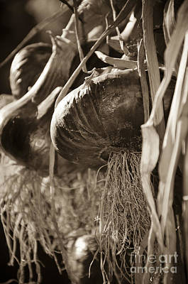 Photograph - Hanging Onions Sepia by Jim And Emily Bush