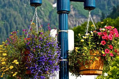 Photograph - Hanging Pots Of Juneau by Eric Tressler