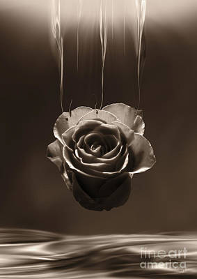 Digital Art - Hanging Rose by Johnny Hildingsson