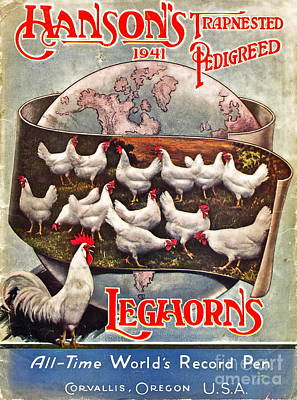 Rooster Photograph - Hansons Leghorns by Gwyn Newcombe